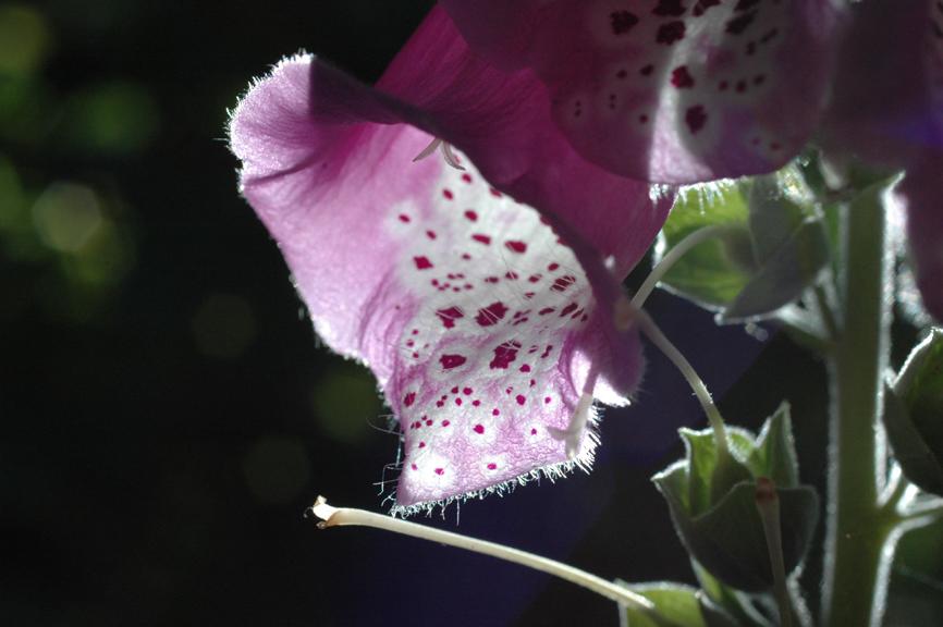 blüten (59)