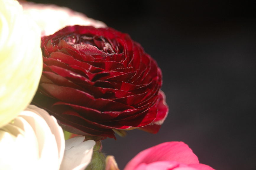 blüten (9)